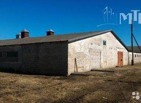Продажа коммерческая недвижимость, Калининградская обл., поселок Поддубье, фото №4