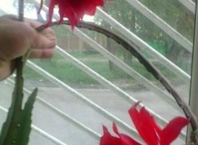 Аренда 1-комнатной квартиры, Карачаево-Черкесия респ., Черкесск, проспект Ленина, фото №4